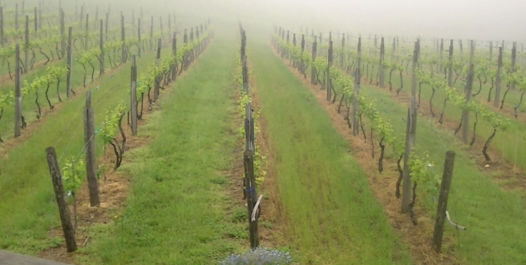Cruise your Cadillac XTS to one of Virginia's many vineyards