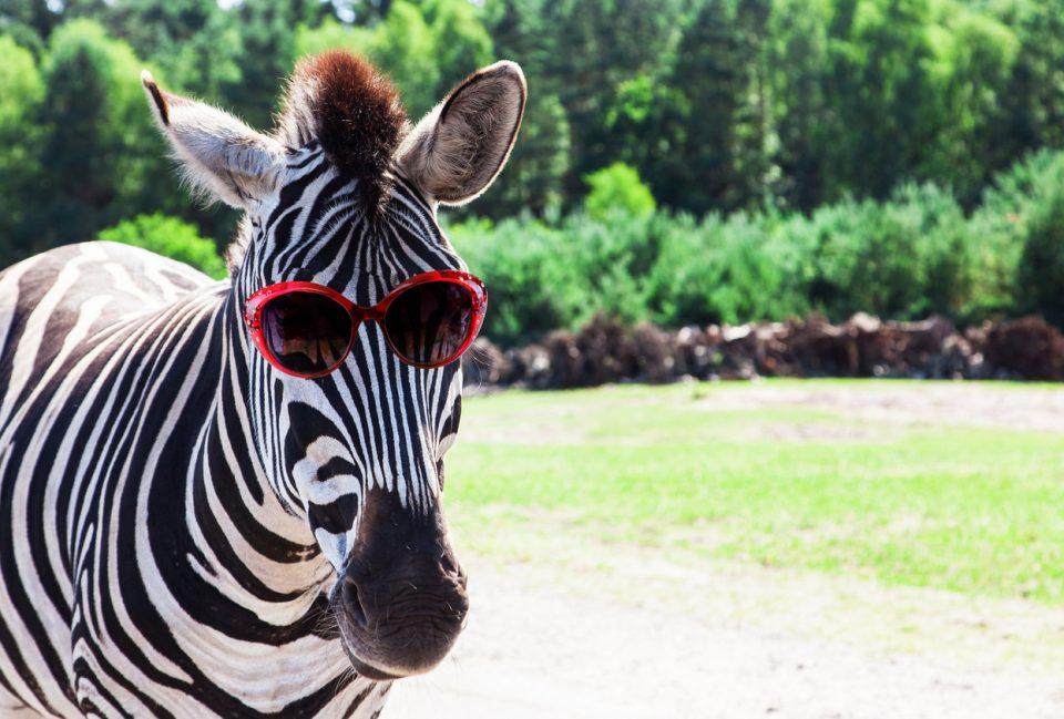 Roer's Zoofari Chantilly, Virginia